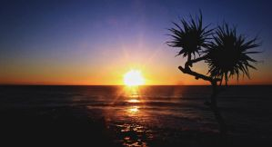 Lonely Pandanus by theDexperience