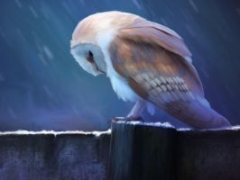 Barn Owl by BoyGTO