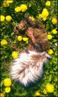 Dalio The Posable Nepal Squirrel by LimitlessEndeavours
