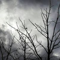 branches-spooky  by Littlemoments86