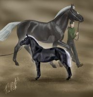 Black Stallion by LadyKallisto
