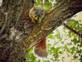 Where is my nuts? by gintautegitte69