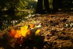 Autumn leaves in July by StuckRainbow