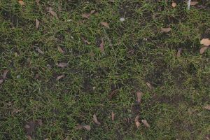 Dry Grass (stock) by justanotherdood