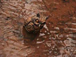 Mud Owl by JeremyC-Photography