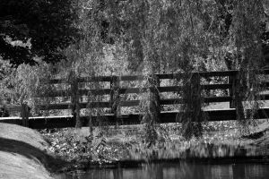 BW path over water by btexpress