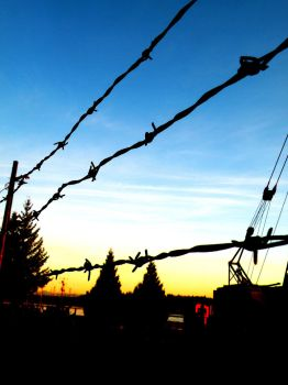 barbed wire by Kioshe-Flares