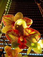 Orchidee by Arzhael71