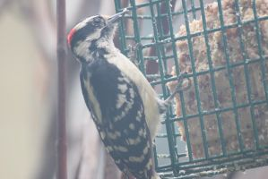 suet addict by paws720