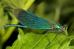 Green Damselfly 01 by s-kmp