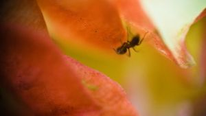 ant again by jeffreyhing