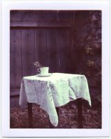 Teacup Polaroid by silversmith