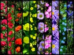 Flowers.. by PaSt1978