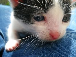 Cute little kitten by Ramoonaa