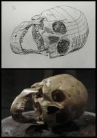 skull contour hatching by Fatal-Noogie