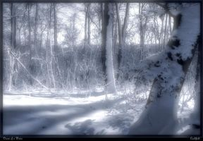 Dream of a Winter by Cauldfield