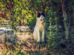 yard cat by BL00DYSunflowers
