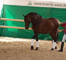Brown Andalusian_3 by CalyHoney