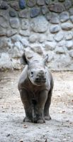 Happy little Rhino by Nikki-vdp