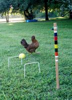gaming chicken by noiselessness