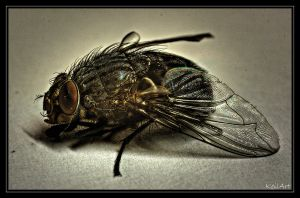 Fly - HDR I by Petrix78