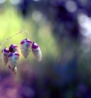 Nature bells by sbluesky