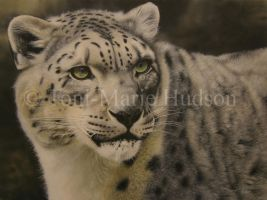 Snow leopard by Canis-Lupess