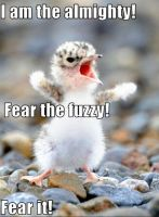 Fear the Fuzzy by Flyingkitty130