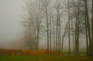 brilliance in the fog by loveandtears