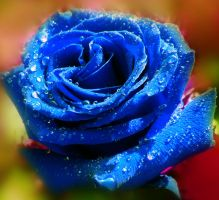 Blue Rose by Birthstone