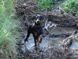 Akron- Our doberman by OmegaEternityCode
