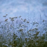 Blue Winter II by JoannaRzeznikowska