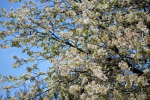Flowery Tree by MaxHedrm0