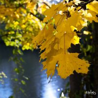 yellow autumn by rdalpes
