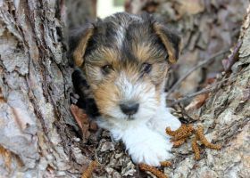 Puppy in the Tree by Lambieb123