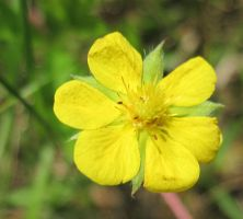 Yellow Flower 2 by Salamander-Stock