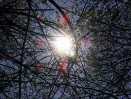 Sun behind tree by Severius