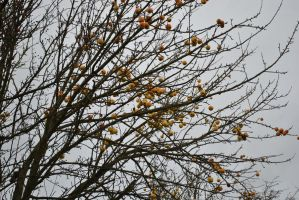 crab apple tree by Izzy-Nightshade