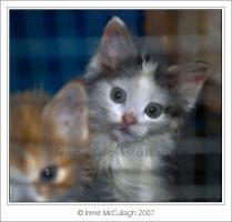 Behind Bars-Peeping Kittens by substar