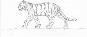 White Tiger by Marie8D