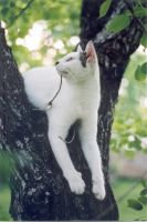 Cat in tree 2 by smackbabe