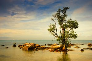 Lonely Tree by mariowibowo