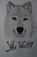 Why Wolf?! by 1happy2gurl3