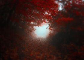 -Road to Self- by Janek-Sedlar