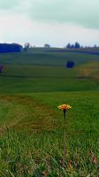 Dandelion with some scenery behind by patrickjobst