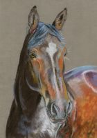 Warmblood portrait in pastels by Hei-La