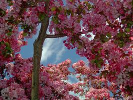 Spring Blossoms No. 85 by schon
