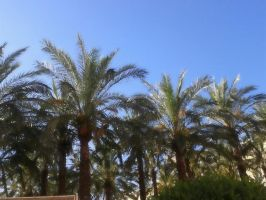 Hot 'nd palms by lalliphotography