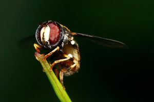 Insects 54 by josgoh