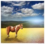 The African Pony by BenHeine